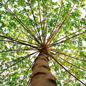 green nature tree 91153